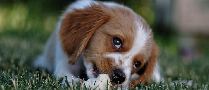 Allergivänliga hundar - finns de och var hittar vi dem?