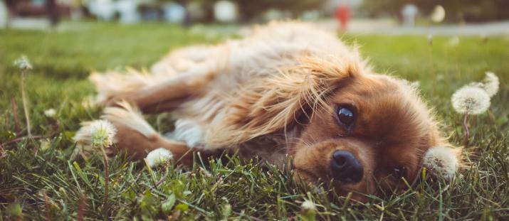 Testpanelen: Balsam för hunden hjälper allergiker