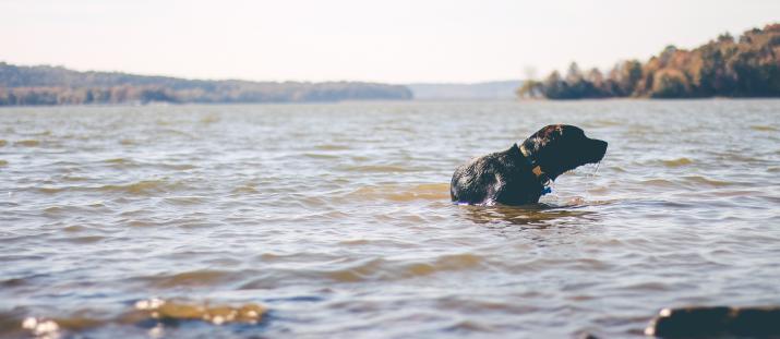 Undvik faror för hund sommartid