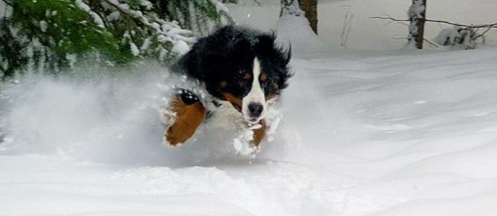 Så skyddar du hundens hud från vinterkylan