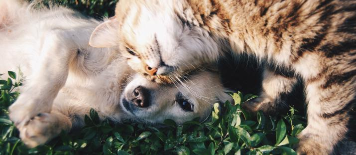 Allergiska besvär mot hund kan bero på pollen