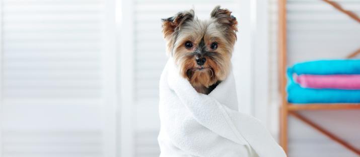 Hjälper hunden och allergiker – Vi lanserar nu Allergenius® Specialbalsam med ny formula
