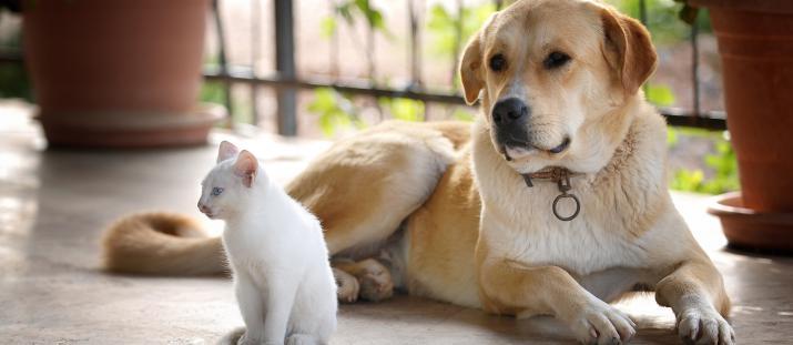 Pälsdjursallergiker är ofta multiallergiska