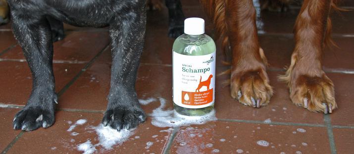 Så blir hunden mer allergivänlig