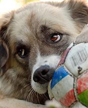Allergivänliga Hundar Hundraser Finns Det